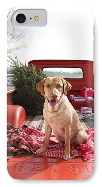 Dog In Truck Bed With Pine Tree Outdoors IPhone Case by Gillham Studios