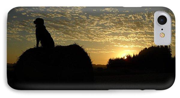 Dog On Hay Greeting Sunrise IPhone Case
