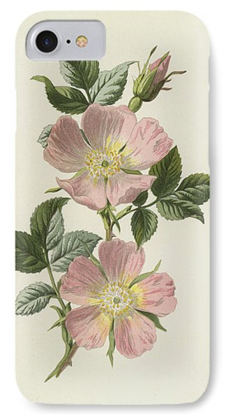 Dog Rose IPhone Case by Frederick Edward Hulme
