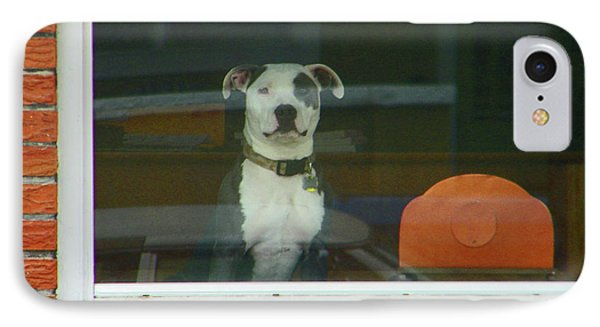 Doggie In The Window IPhone Case by Lenore Senior