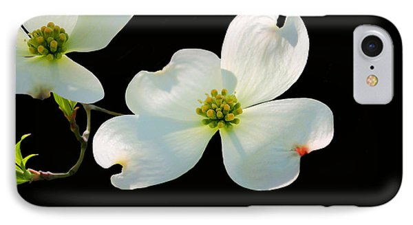 Dogwood Blossoms Phone Case by Kristin Elmquist