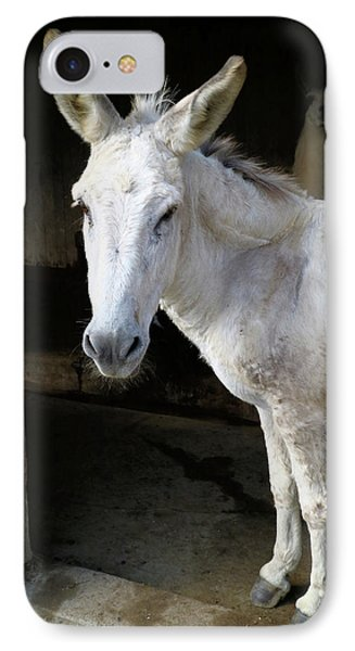 IPhone Case featuring the photograph Donkey Hellow by Scott Kingery