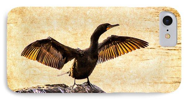 Double-crested Cormorant IPhone Case by Bob Orsillo