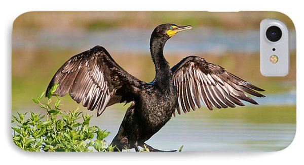 Double-crested Cormorant IPhone 7 Case