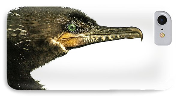Double-crested Cormorant  IPhone Case by Robert Frederick