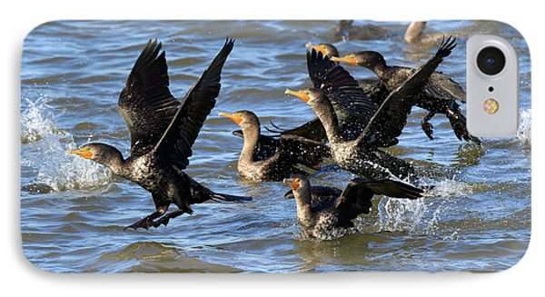Double Crested Cormorants Phone Case by Louise Heusinkveld