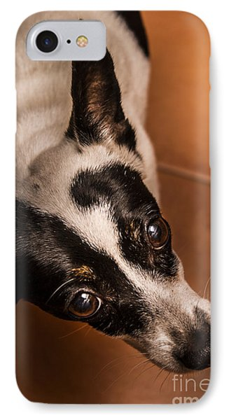 Dough-eyed Dog IPhone Case by Jorgo Photography - Wall Art Gallery