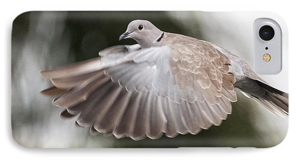 Dove Flight IPhone Case by Don Durfee