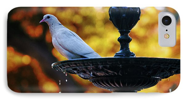 IPhone Case featuring the photograph Dove On Fountain Genovese Park Cadiz Spain by Pablo Avanzini