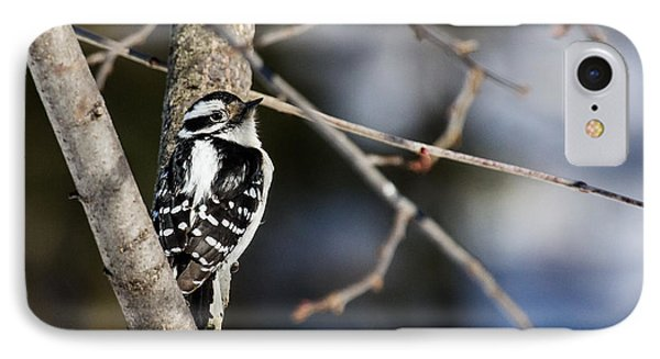 IPhone Case featuring the photograph Downy Woodpecker by Dan Traun