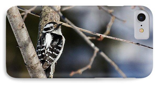 Downy Woodpecker IPhone Case by Dan Traun