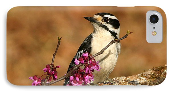 Downy Woodpecker In Spring IPhone Case by Sheila Brown