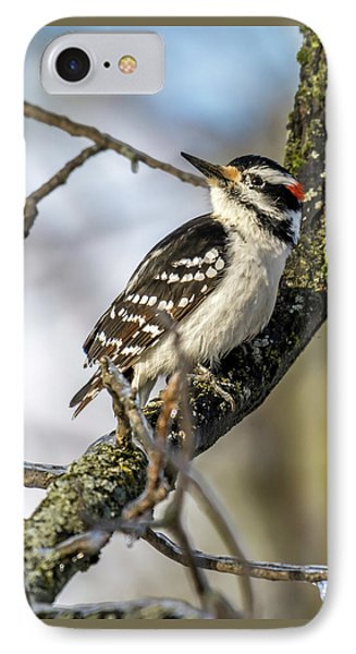 Downy Woodpecker IPhone Case by Irwin Seidman