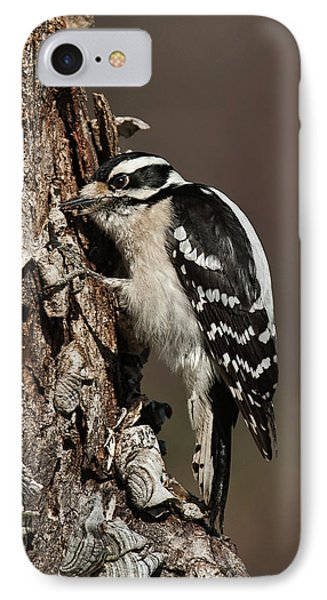 IPhone Case featuring the photograph Downy Woodpecker's Secret Stash by Lara Ellis