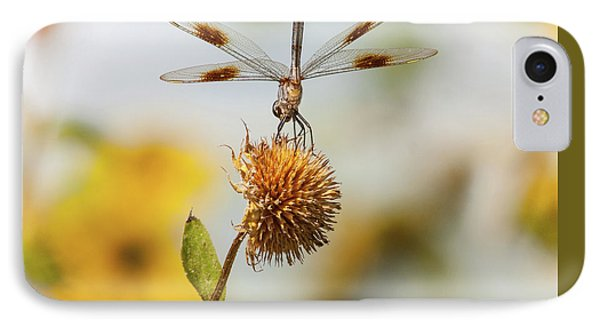 Dragonfly On Dead Bud IPhone Case by Robert Frederick