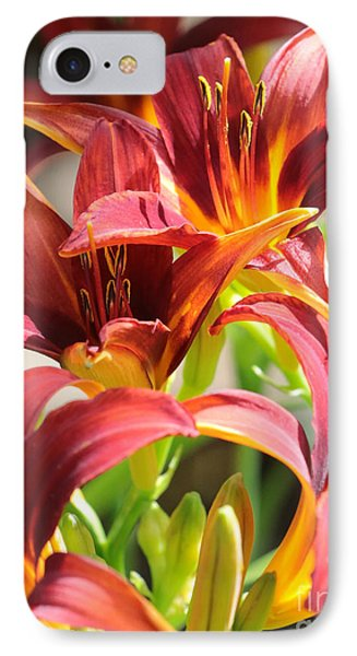 Dramatic Daylily IPhone Case by Carol Groenen