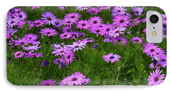 Dreaming Of Purple Daisies  IPhone Case by Carol Groenen
