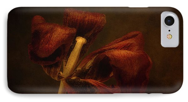 Dried Tulip Blossom 2 IPhone Case