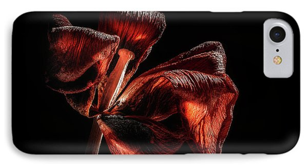 Dried Tulip Blossom IPhone Case by Scott Norris