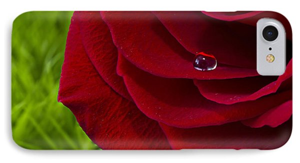 Drop On A Rose IPhone Case by Marlo Horne