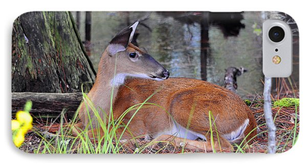 IPhone Case featuring the photograph Drowsy Deer by Al Powell Photography USA