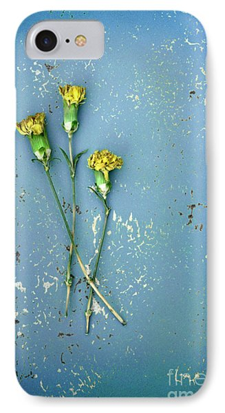 Dry Flowers On Blue IPhone Case by Jill Battaglia