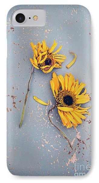 Dry Sunflowers On Blue IPhone Case by Jill Battaglia