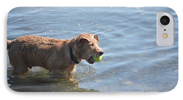 Duck Tolling Retriever With A Tennis Ball In His Mouth IPhone Case by DejaVu Designs