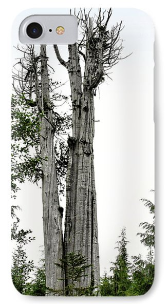 Duncan Memorial Big Cedar Tree - Olympic National Park Wa Phone Case by Christine Till