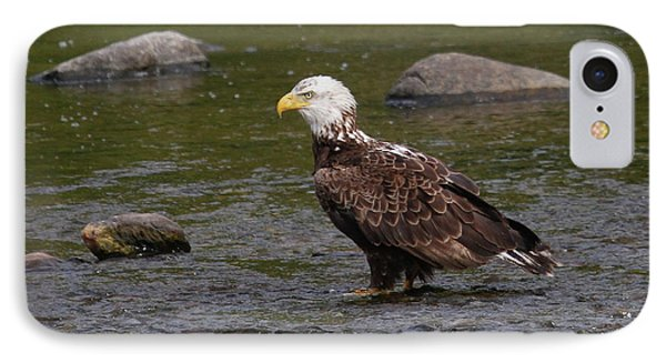 IPhone Case featuring the photograph Eagle Deep In Thought by Debbie Stahre