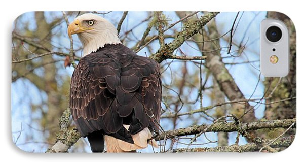 Eagle Eye On You  IPhone Case by Debbie Stahre