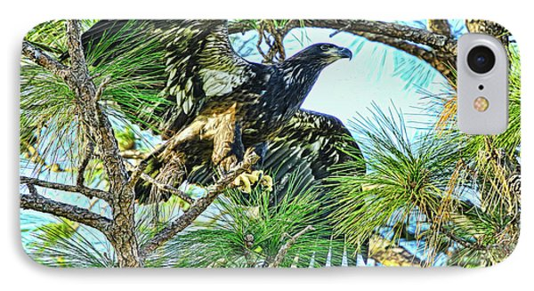 IPhone Case featuring the photograph Eagle Fledgling 2017 by Deborah Benoit