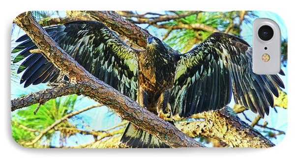 IPhone Case featuring the photograph Eagle Fledgling II 2017 by Deborah Benoit