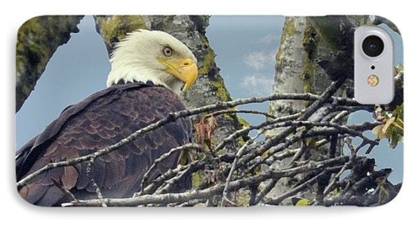 IPhone Case featuring the photograph Eagle In Nest by Rod Wiens