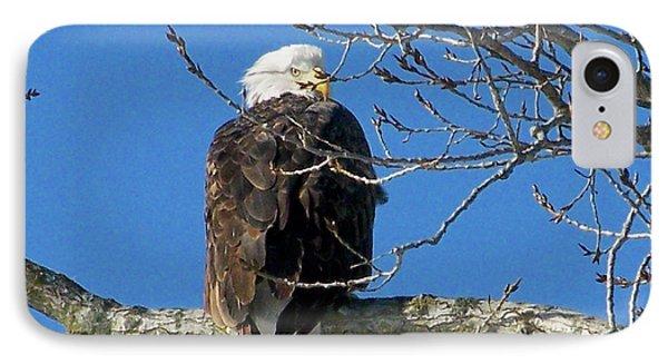 Eagle Watch IPhone Case by Sue Stefanowicz