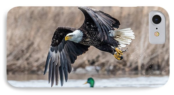 Eagle With Lunch IPhone Case by Paul Freidlund