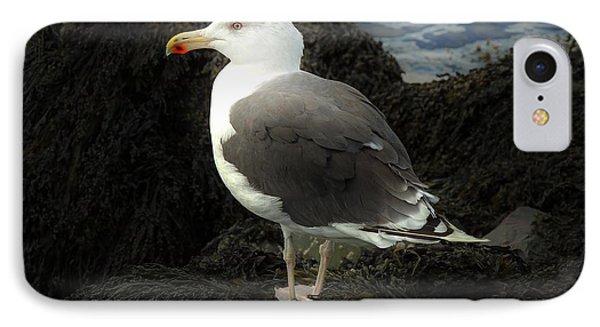 East Coast Herring Seagull IPhone Case by Marcia Lee Jones