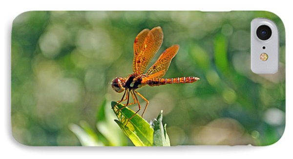 Eastern Amber Wing Dragonfly Phone Case by Kenneth Albin