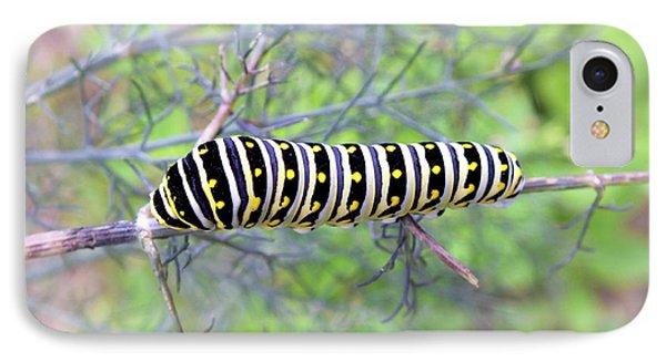 Eastern Black Swallowtail Caterpillar  IPhone Case