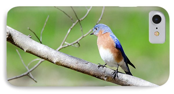 IPhone Case featuring the photograph Eastern Bluebird by George Randy Bass