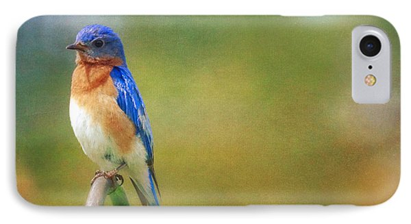 IPhone Case featuring the photograph Eastern Bluebird Painted Effect by Heidi Hermes