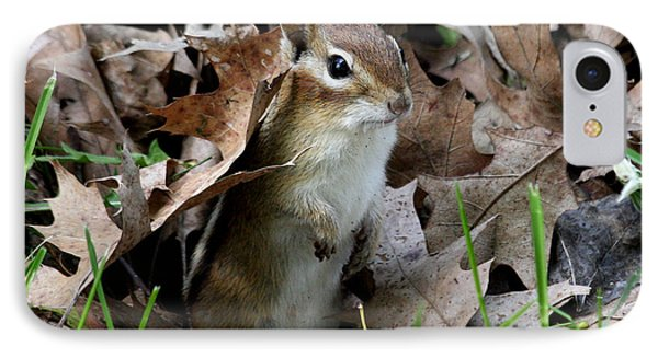 Eastern Chipmunk IPhone Case by Doris Potter