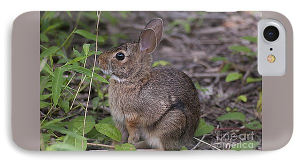 Eastern Cottontail 20120624_11a IPhone Case by Tina Hopkins