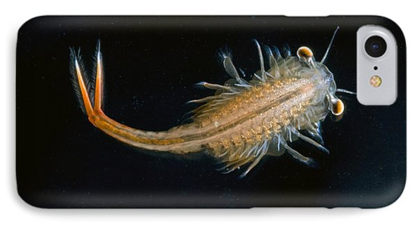 Eastern Fairy Shrimp Easterbrook Forest Phone Case by Piotr Naskrecki