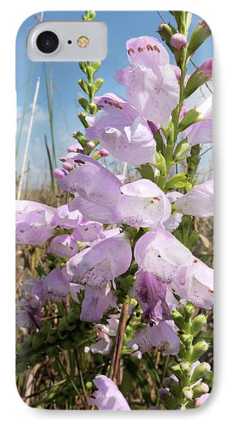 IPhone Case featuring the photograph Eastern Gray Beardtongue by Scott Kingery