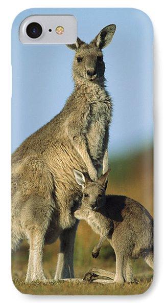 Eastern Grey Kangaroo And Her Joey Phone Case by Ingo Arndt