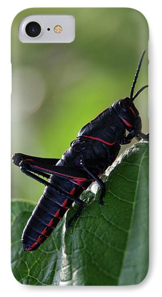 Eastern Lubber Grasshopper IPhone Case by Richard Rizzo
