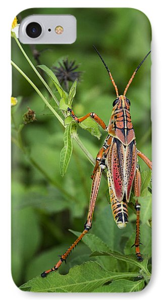 Eastern Lubber Grasshopper  IPhone 7 Case by Saija  Lehtonen