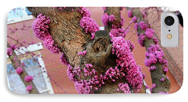 Eastern Redbud Tree -- Blooming Tree Trunks IPhone Case