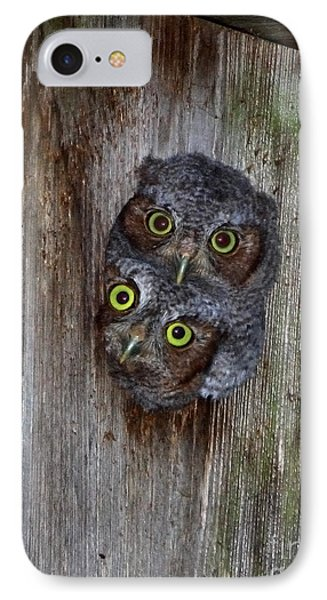 Eastern Screech Owl Chicks IPhone Case